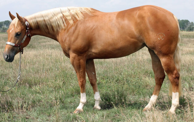 Futurity Horse for Sale