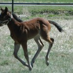Wimpy Sparkles x Dirty Dancing Diva filly owned by Shevin Haverty
